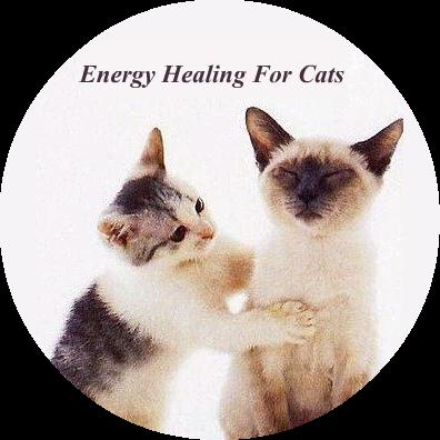 貓咪能量療癒 energy healing for cats