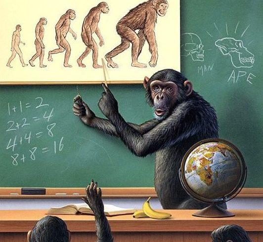 猴子進化與溝通頻率