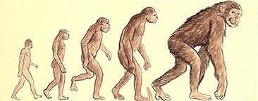 猩猩 百猴效應 生命進化