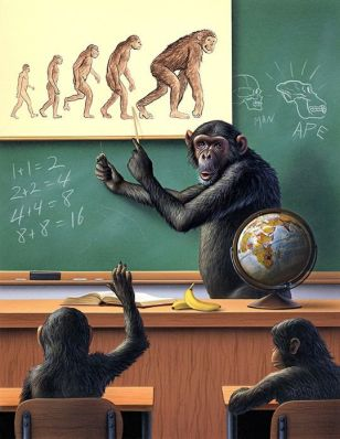 monkey-evolution